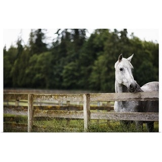 """""""Horse in field looking over fence"""" Poster Print"""