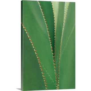 Premium Thick-Wrap Canvas entitled Agave detail in Tortolain, British Virgin Islands