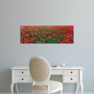 Easy Art Prints Panoramic Images's 'Wild poppies growing in a field, South Downs, Sussex, England' Premium Canvas Art