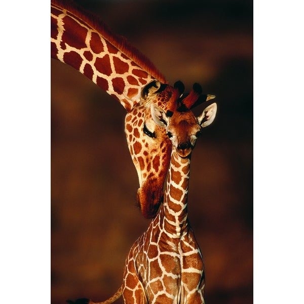 Giraffe & Baby - LP Photography (100% Cotton Towel Absorbent)