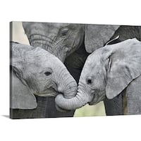 Premium Thick-Wrap Canvas entitled African elephant calves (Loxodonta africana) holding trunks, Tanzania