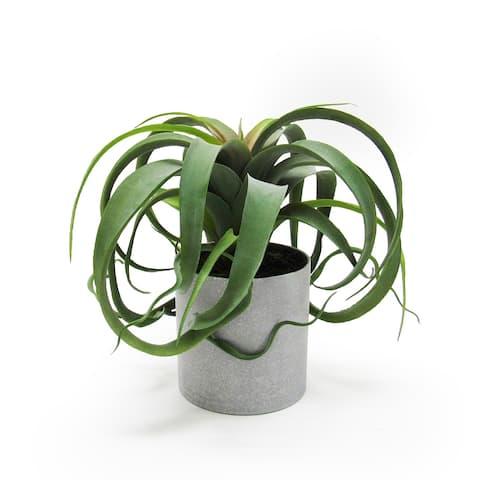 "9in Large Tillandsia Succulent Plant in Grey Pot - 9"" H x 11"" W x 11"" DP"