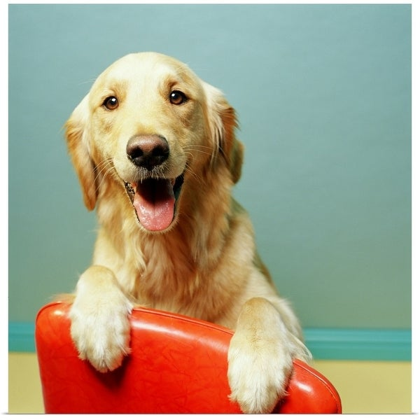 Shop Poster Print Entitled Happy Golden Retriever On A Red Chair