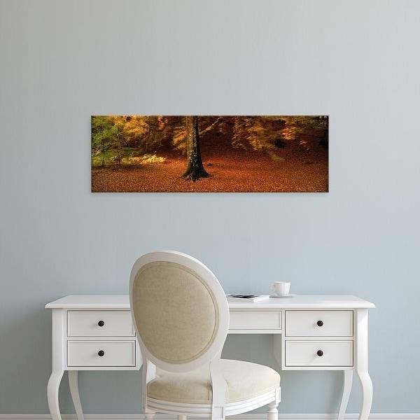 Easy Art Prints Panoramic Images's 'Autumn Leaves Perthshire Scotland' Premium Canvas Art
