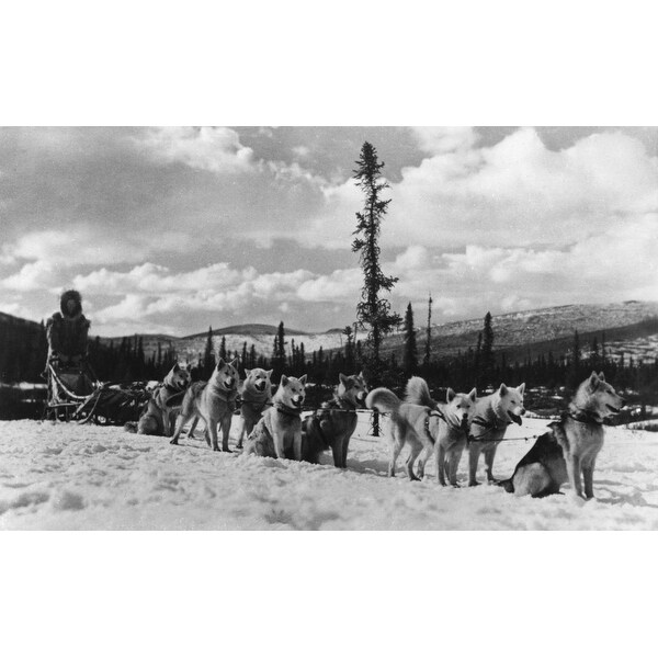 Siberian Sled Dogs resting in AK - Vintage Photo (100% Cotton Towel Absorbent)