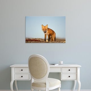 Easy Art Prints Steve Kazlowski's 'Red Fox' Premium Canvas Art