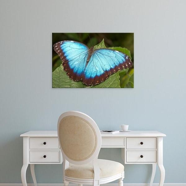 Easy Art Prints William Sutton's 'Blue Morpho Butterfly' Premium Canvas Art
