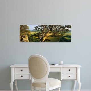 Easy Art Prints Panoramic Images's 'High angle view of a cedar tree, Wisconsin, USA' Premium Canvas Art