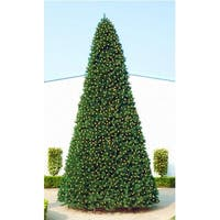 20' Giant Pre-Lit Everest Fir Commercial Christmas Tree - Warm White LED Lights