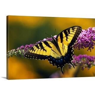 """Male Tiger Swallowtail Butterfly On Blooming Purple Flower"" Canvas Wall Art"