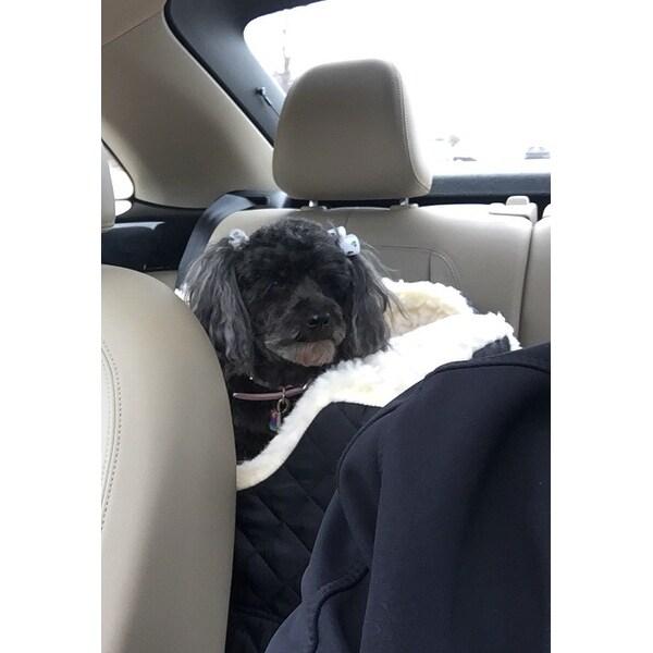 Shop Snoozer Lookout II Black Cream Dog Car Seat