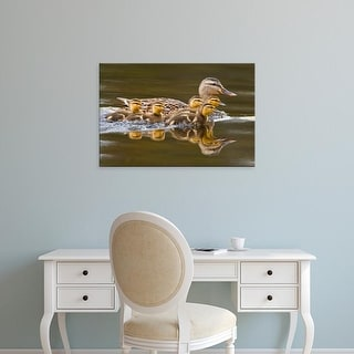 Easy Art Prints Larry Ditto's 'Mallard Duck' Premium Canvas Art