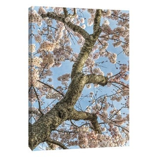 "PTM Images 9-105982  PTM Canvas Collection 10"" x 8"" - ""Cherry Blossoms 2"" Giclee Cherry Blossoms Art Print on Canvas"