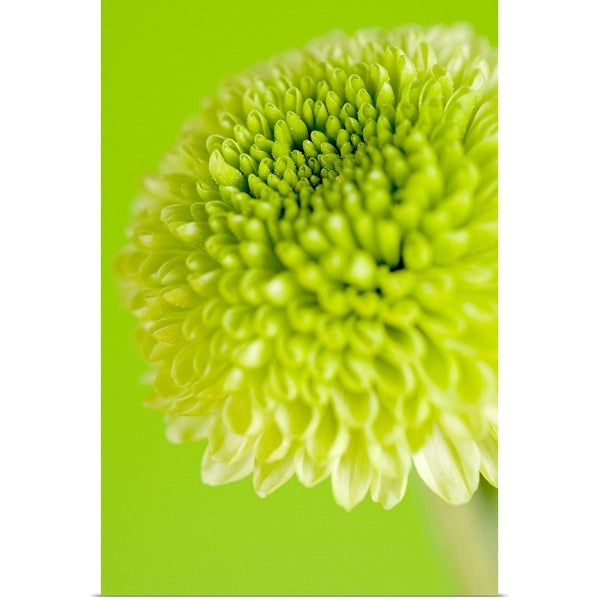"""Green flower"" Poster Print"