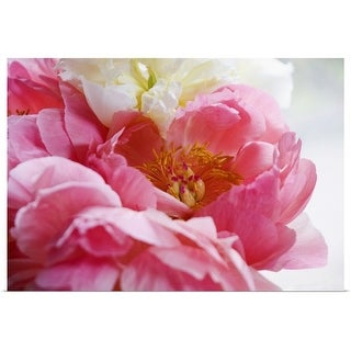 """Close up shot of a pink peony"" Poster Print"