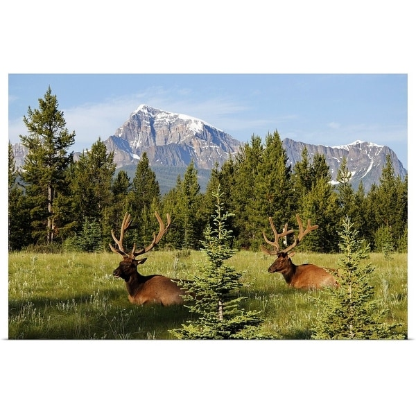 """Elks at Bow Valley, Banff Nationalpark, Alberta, Canada"" Poster Print"