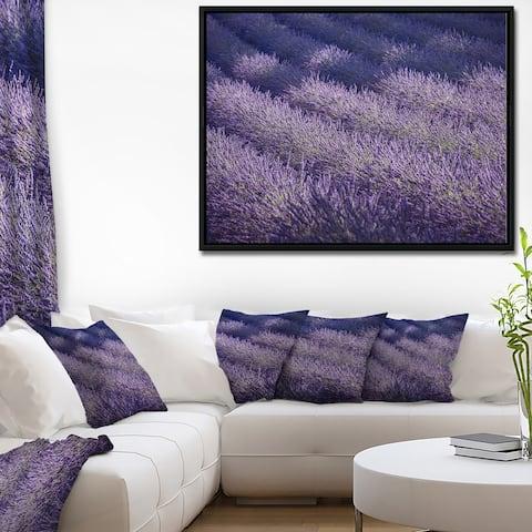 Designart 'Lavender Field and Ray of Light' Landscape Framed Canvas Art