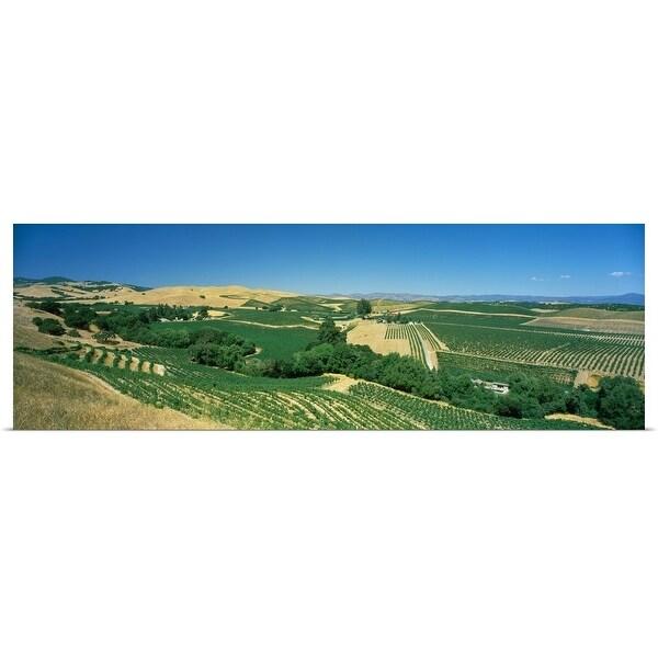 """Vineyard, Carneros District, Napa Valley, Napa County, California"" Poster Print"