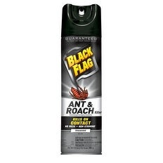 Black Flag HG-11031 Ant and Roach Killer Aerosol Spray, 17.5 Oz