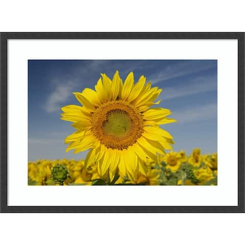Sunflower Close Up by Jaynes Gallery Danita Delimont Framed Wall Art