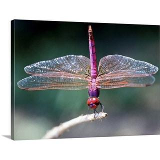 """Dragonfly"" Canvas Wall Art"