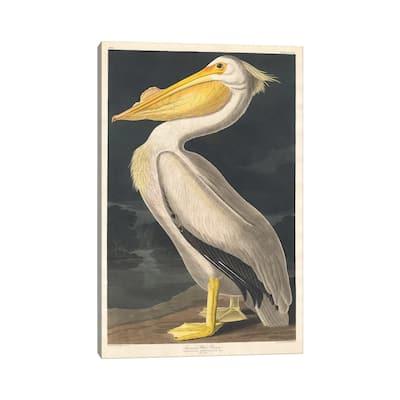 "iCanvas ""American White Pelican"" by John James Audubon Canvas Print"