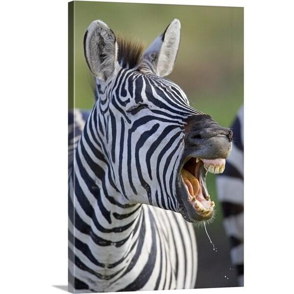 Shop Close Up Of A Zebra Calling Ngorongoro Crater