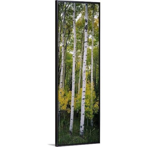"""Rocky mountain aspen forest"" Black Float Frame Canvas Art"
