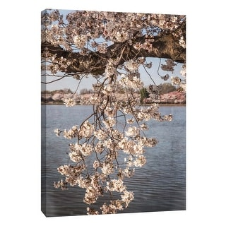 "PTM Images 9-105983  PTM Canvas Collection 10"" x 8"" - ""Cherry Blossoms 4"" Giclee Cherry Blossoms Art Print on Canvas"