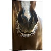 Premium Thick-Wrap Canvas entitled Muzzle of horse - Multi-color