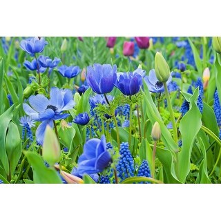 Hues of Blue - 40 Count Mixed Flower Bulb Collection