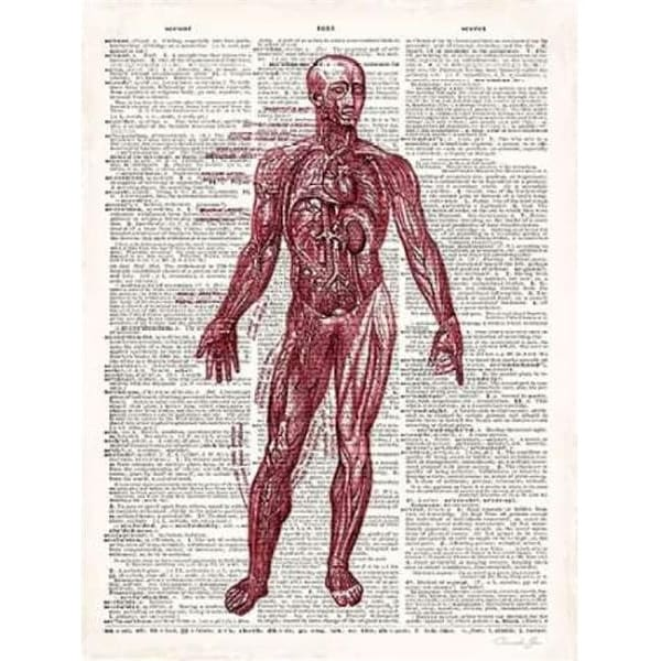 Shop Vintage Anatomy Book Poster Print By Christopher James 9 X 12