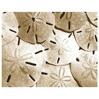 ''Sand Dollar Grouping'' by Anon Coastal Art Print (11.5 x 14.5 in.)
