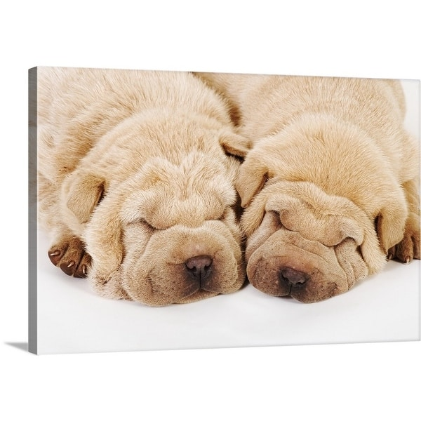 Shop Two Shar Pei Puppies Sleeping White Background Multi