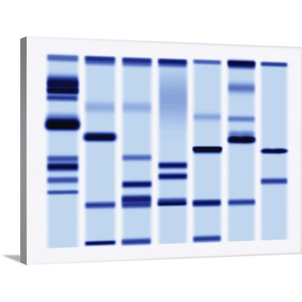 """""""DNA Sequencing Gel, Close-Up"""" Canvas Wall Art"""