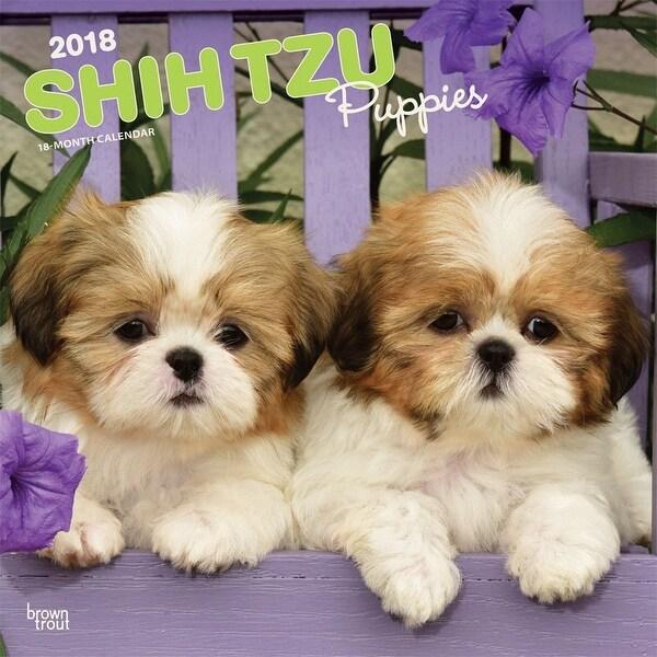 Shop Shih Tzu Puppies Wall Calendar Shih Tzu By Browntrout Free
