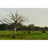 Cow Pasture Photograph Wall Art Canvas