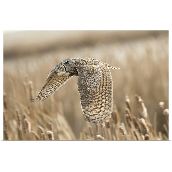 """""""Great Horned Owl"""" Poster Print"""