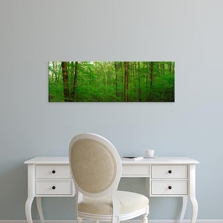 Easy Art Prints Panoramic Images's 'Forest, Hoosier National Forest, Indiana, USA' Premium Canvas Art
