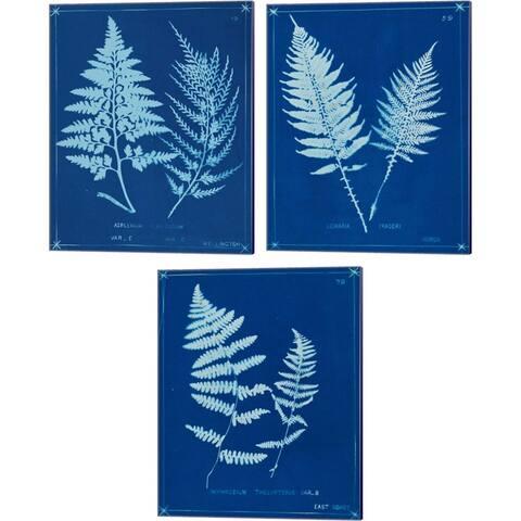Unknown 'Cyanotype Ferns B' Canvas Art (Set of 3)