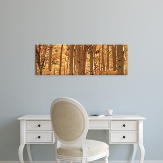 Easy Art Prints Panoramic Images's 'Aspen trees in a forest, Rock Creek Lake, California, USA' Premium Canvas Art