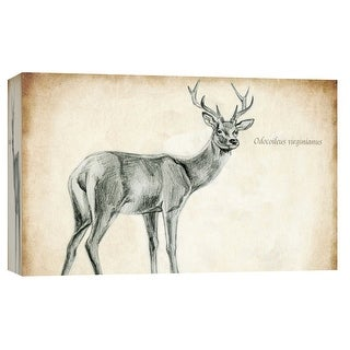 """PTM Images 9-103722  PTM Canvas Collection 8"""" x 10"""" - """"Scientific Deer Sketch 1"""" Giclee Deer Art Print on Canvas"""