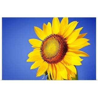 """""""Sunflower against blue sky."""" Poster Print"""