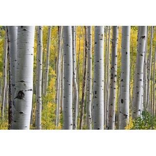 White Bird Trees Photograph Art Print