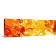 Premium Thick-Wrap Canvas entitled Autumn Leaves