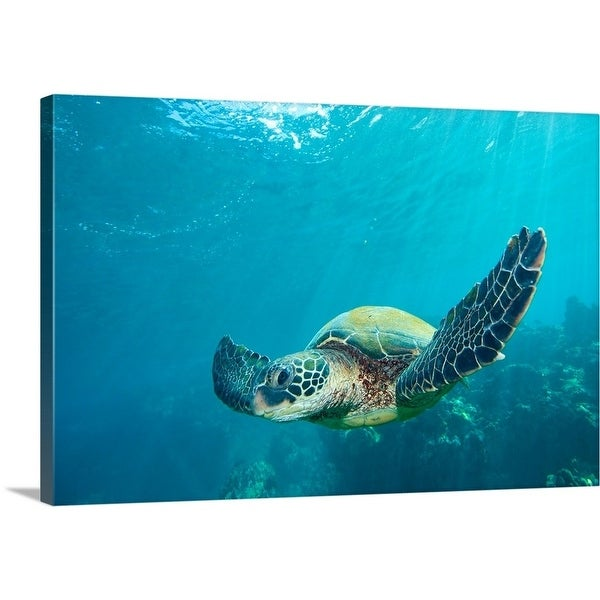 Premium Thick Wrap Canvas Enled Green Sea Turtle Multi Color