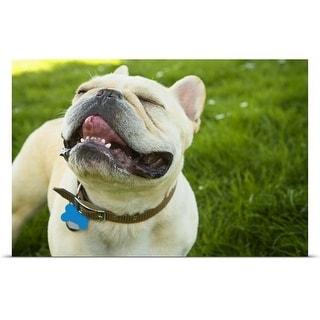 """French Bulldog"" Poster Print"