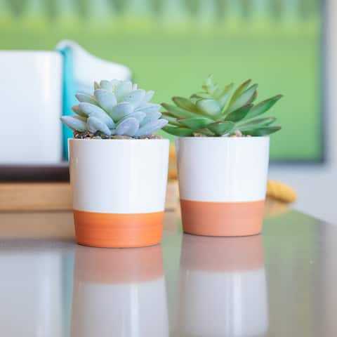 Set of 2 Artificial Plant Succulent IN CERAMIC COLOR BLOCK Pot - ONE-SIZE