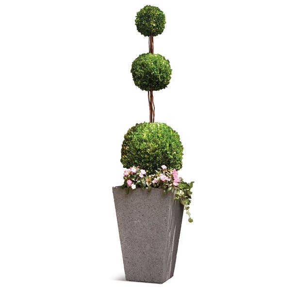Napa Home And Garden 7587PG 96 Inch Tall English Boxwood Triple Ball  Topiary   Multi Colored