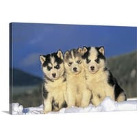 Premium Thick-Wrap Canvas entitled Three Siberian Husky puppies sitting in snow - Multi-color
